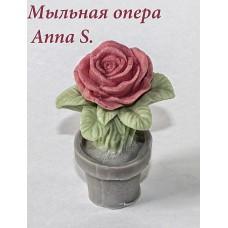 Роза с горшочке