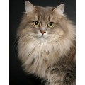 Кошка №8