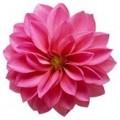Цветок мал №3