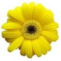 Цветок мал №5