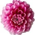 Цветок мал №6