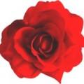 Цветок мал №7