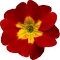 Цветок мал №9