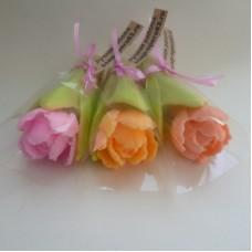Махровый тюльпан