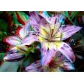 Цветы №11